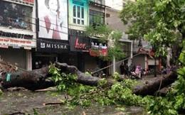 Hà Nội: Hé lộ nguyên nhân cây xanh đổ gẫy sau bão số 1