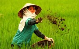 Thái Lan chỉ dùng 100 loại phân bón, Việt Nam đang dùng tới... 10.000 loại