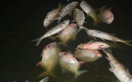 Hà Nội: Cá chết nhiều bất thường ở hồ Linh Đàm