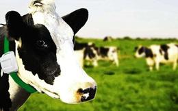 Các ông lớn sữa như TH True Milk hay Vinamilk chắc chắn thích công nghệ mới này