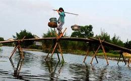 TS Nguyễn Đình Cung: Doanh nghiệp hội nhập như đi trên cầu khỉ, đã cô đơn còn phải gánh nặng