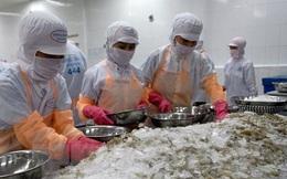 Nhật Bản kiểm tra 100% các lô hàng tôm đông lạnh nhập từ Việt Nam