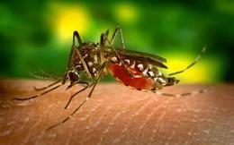Đây là lý do vì sao muỗi chỉ đốt mỗi mình bạn
