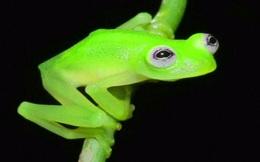 Chúng ta mới chỉ biết 0,001% các sinh vật trên Trái Đất thôi, còn gần 1.000 tỷ loài khác nữa