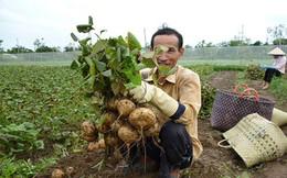 """Thứ trưởng Bộ Kế hoạch Đầu tư: """"Củ đậu quê tôi bán 5.000 đồng/kg, đi 120km ra Hà Nội giá lên 50.000 đồng/kg"""""""