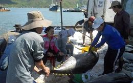 Trung Quốc đang nhập khẩu ngày càng nhiều tôm và cá ngừ Việt Nam