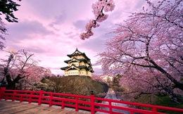 Du học Nhật: Đừng để cảnh hồ hởi tiễn con đi, đón con về trong nước mắt