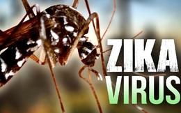 Virus Zika có hình thù như thế nào?