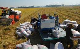 Đề xuất bỏ quỹ bình ổn giá bán lẻ điện và thóc, gạo