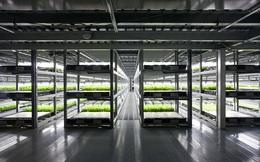 Độc đáo mô hình trang trại trồng rau tự động ở Nhật