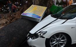 Cây đổ đè ôtô, người dân trong mưa ở Sài Gòn