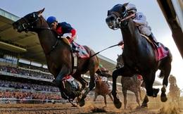Vĩnh Phúc chấp thuận dự án trường đua ngựa 1,5 tỷ USD