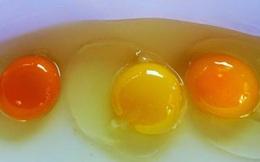 Nhìn lòng đỏ trứng, bạn có biết quả trứng nào được sinh bởi con gà khỏe mạnh?
