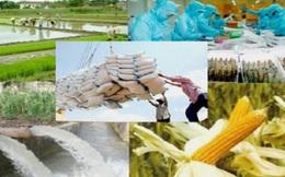 Vì sao nông sản Việt vẫn chưa được gọi tên trên thị trường thế giới?