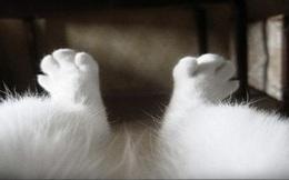 Nam giới đừng dại cạo lông chân, thống kê cho thấy phụ nữ thích đàn ông có đôi chân... rậm rạp