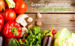 Nếu quá sợ hãi thực phẩm bẩn, sao bạn không tìm hiểu về thực phẩm hữu cơ?