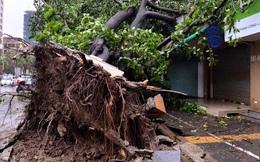 Cây đổ la liệt trong bão Mirinae ở Hà Nội