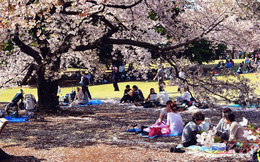 Nhật Bản 'đất nước câm lặng'