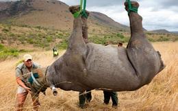 Chùm ảnh: Thế giới sắp phải hứng chịu cuộc đại tuyệt chủng lớn nhất trong lịch sử nhân loại