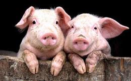 Hai Bộ Công - Nông khai số liệu thịt lợn xuất khẩu vênh nhau làm Phó Thủ tướng Vương Đình Huệ không biết đằng nào mà lần