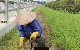 """Muốn thành """"tỷ phú"""", hãy hành nghề cắt cỏ dọc đại lộ Thăng Long"""