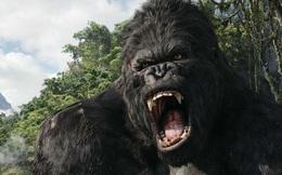 Nhà sản xuất Kong: Skull Island gửi thư cảnh báo truyền thông VN