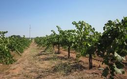 Canh tác khô - một hướng đi cho nông nghiệp nhằm ứng phó biến đổi khí hậu