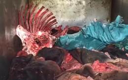Bắt xe tải chở 1,4 tấn da trâu bò bốc mùi hôi thối đang trên đường vận chuyển đến Hà Nội