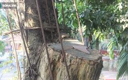 Một người Trung Quốc góp hơn 19 tỷ đồng mua gỗ của cây sưa 100 tỷ ở Hà Nội