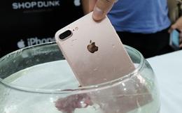 Thử nghiệm: iPhone 7 Plus đi bơi cùng 2 chú cá chọi và kết quả là... không sao cả