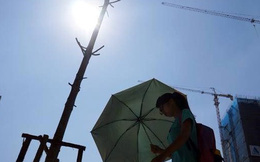 Đi nước ngoài học cắt tỉa, trồng cây: Người ta sẽ coi thường người Việt Nam?