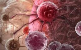"""Kết hợp 2 phương pháp truyền thống, các nhà khoa học tạo ra """"cú đấm"""" thực sự có thể đánh bại ung thư"""