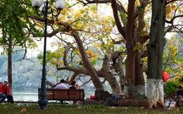 Hồ Gươm đẹp mơ màng mùa lộc vừng thay lá