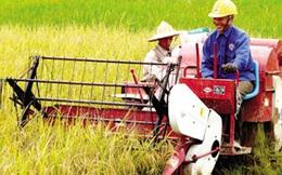 Cơ hội cho người muốn startup nông nghiệp là đây: Làm cho đúng cái đang sai trong trồng trọt & chăn nuôi