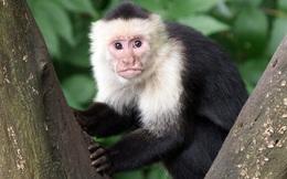 Thí nghiệm về 2 con khỉ và cái kết đầy bất ngờ sẽ khiến bạn phải suy ngẫm về sự công bằng