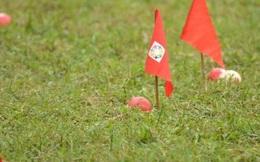 Wiser Ball – môn thể thao kỳ thú thách thức giới trẻ