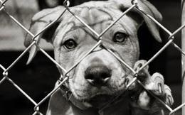 Người Việt ăn thịt 5 triệu con chó mỗi năm, nhiều số 2 thế giới
