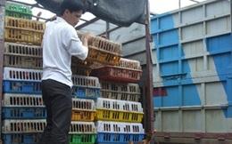 """""""Phát sốt"""" với đề xuất nhập khẩu gà chính ngạch từ Trung Quốc"""