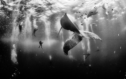 Những bức ảnh chụp dưới nước đẹp đáng kinh ngạc này là sản phẩm của máy ảnh du lịch