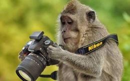 Trao nhầm giải cho bức ảnh photoshop siêu tệ, ngay lập tức Nikon bị cộng đồng mạng biến thành trò cười
