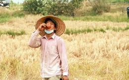 10 năm sau, mỗi nông dân Sài Gòn sẽ kiếm được gần 100 triệu đồng/năm