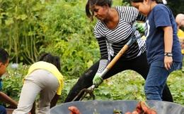 Đến phu nhân tổng thống Obama còn trồng loại củ này, chẳng có lý do gì mà không ăn nó mỗi ngày