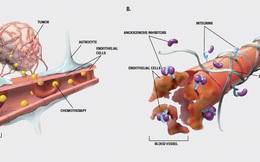 Phát hiện đột phá giúp điều trị ung thư và các bệnh về não