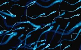 """Phát triển thành công tinh trùng nhân tạo thụ tinh tốt như như """"đồ thật"""" nhờ tế bào gốc"""