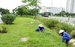 Họp bàn 1 tháng, Hà Nội giảm được gần 700 tỉ đồng phí cắt cỏ, tỉa cây xanh