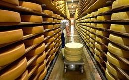 Cấm vận Nga, ngành sữa Mỹ nhận quả đắng