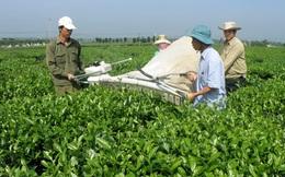 """Lâm Đồng đưa ra hàng loạt ưu đãi """"khủng"""" thu hút vốn vào nông nghiệp"""