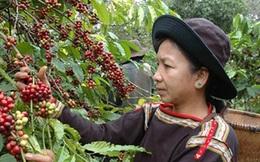 Xuất khẩu nông sản năm 2016: Gạo hụt hơi, cà phê bứt phá