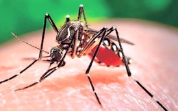 TPHCM có thêm 2 thai phụ nhiễm Zika