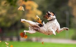 Ai bảo chỉ có con người mới xao xuyến trước vẻ đẹp của mùa thu, động vật cũng suy tư lắm đấy